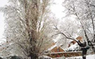 El Chopo de Caño Viejo (nevado)
